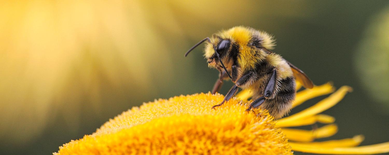 Los microplásticos también están en las abejas: principalmente fragmentos de poliéster y PVC adheridos a sus cuerpos ...