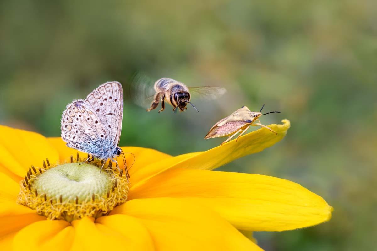 El Biodiversity Trends Explorer revela cómo la biodiversidad global ha caído peligrosamente por debajo del límite seguro ...