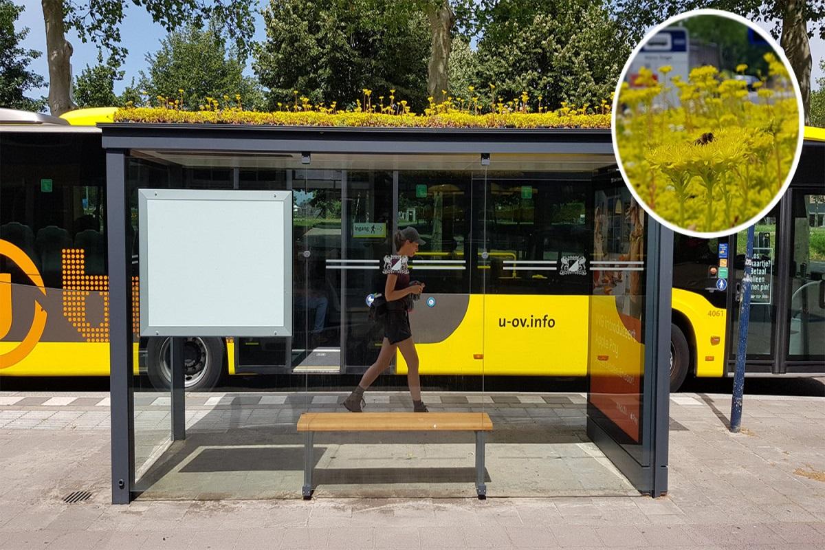 """Hoteles y paradas de autobús """"green"""" para las abejas han salvado a 200.000 polinizadores en los Países Bajos"""