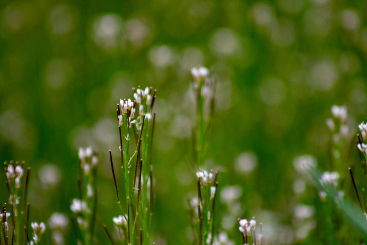 Se pueden usar nanopartículas de sílice en lugar de pesticidas para proteger las plantas. El estudio científico ...