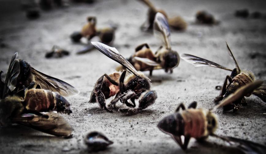 El estudio sobre los efectos dramáticos del glifosato en el desarrollo de las abejas melíferas ...