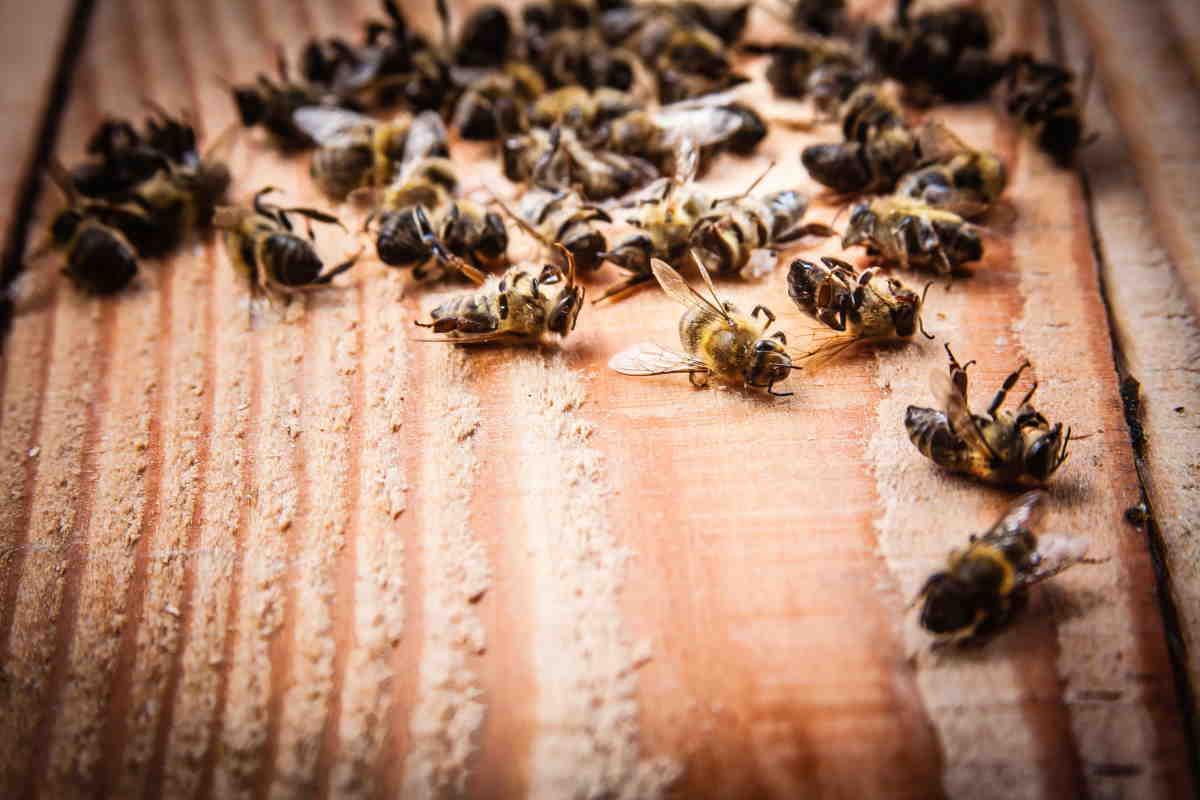 Bayer, rechazada apelación sobre plaguicidas neonicotinoides: el Tribunal de Justicia de la Unión Europea salva las abejas ...