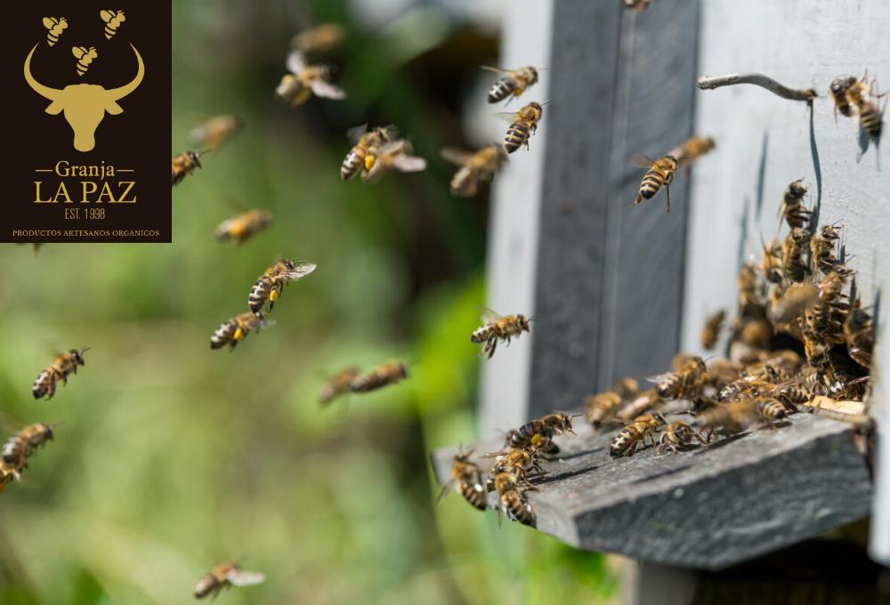 El maravilloso baile de las abejas: se han revelado más de 1.500 pasos hasta ahora desconocidos ...