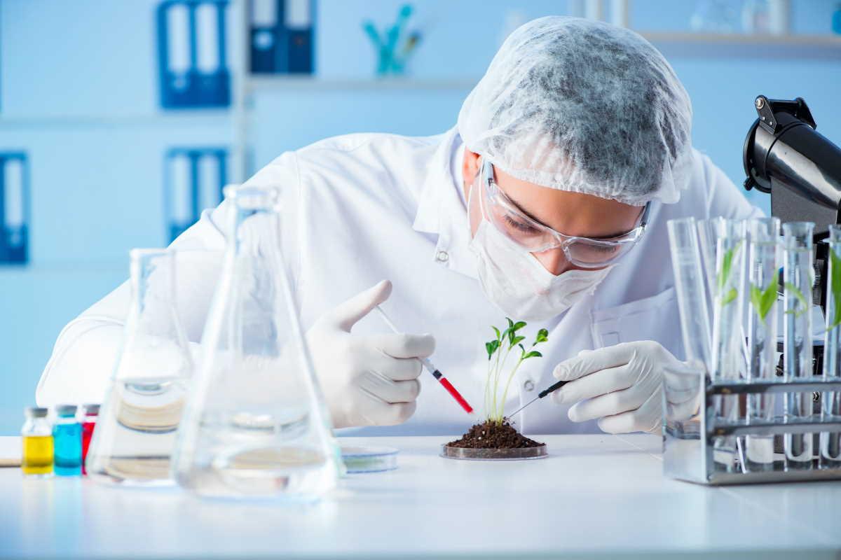Y al final, la Comisión Europea abrió oficialmente la puerta a nuevos OMG...