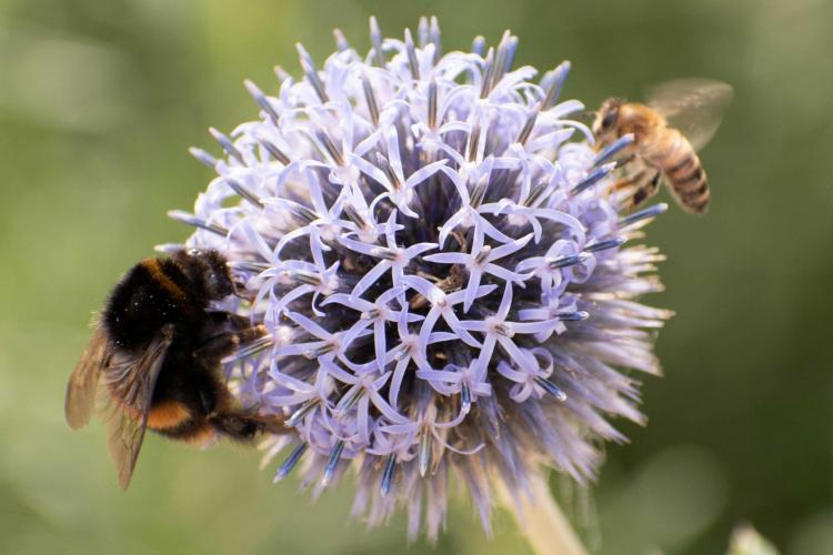 Alemania asigna 100 millones de euros anuales para proteger los insectos...