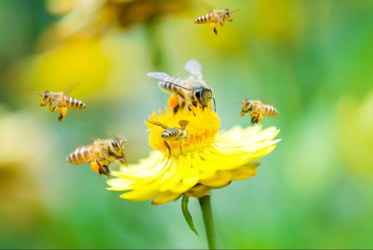 Abejas: películas para adultos y niños para aprender más sobre los polinizadores que son factores importantes de la biodiversidad ...
