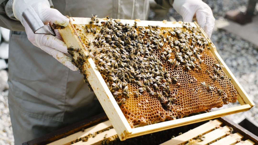 ¿Sufres de Disfunción eréctil? Las abejas te pueden ayudar...