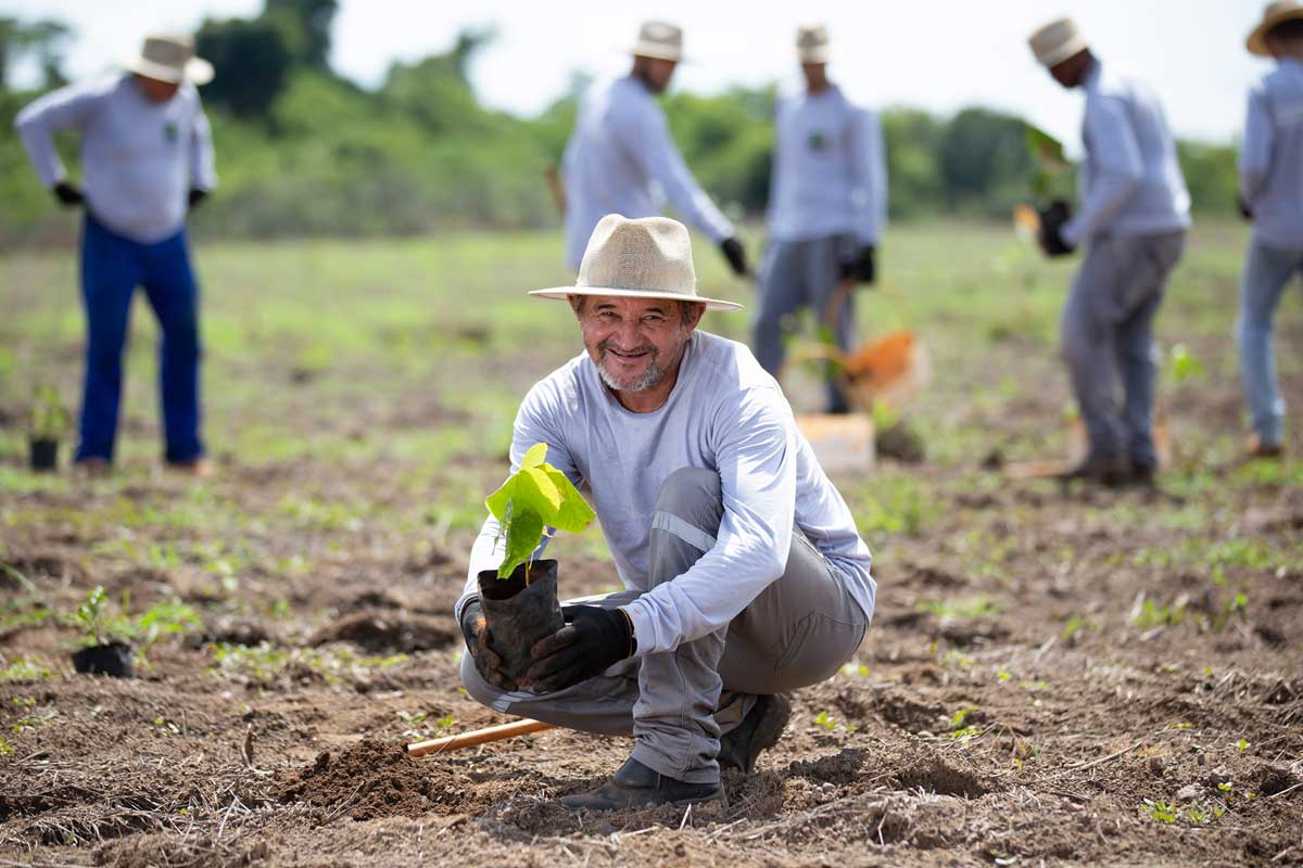 Brasil plantará 1.700 millones de árboles para crear el corredor ecológico más grande del mundo ...