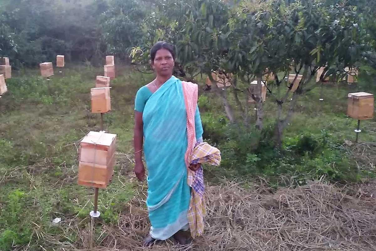 """Cosechado la primera miel de moringa, un proyecto """"dulce"""" para apoyar a las mujeres indias ..."""