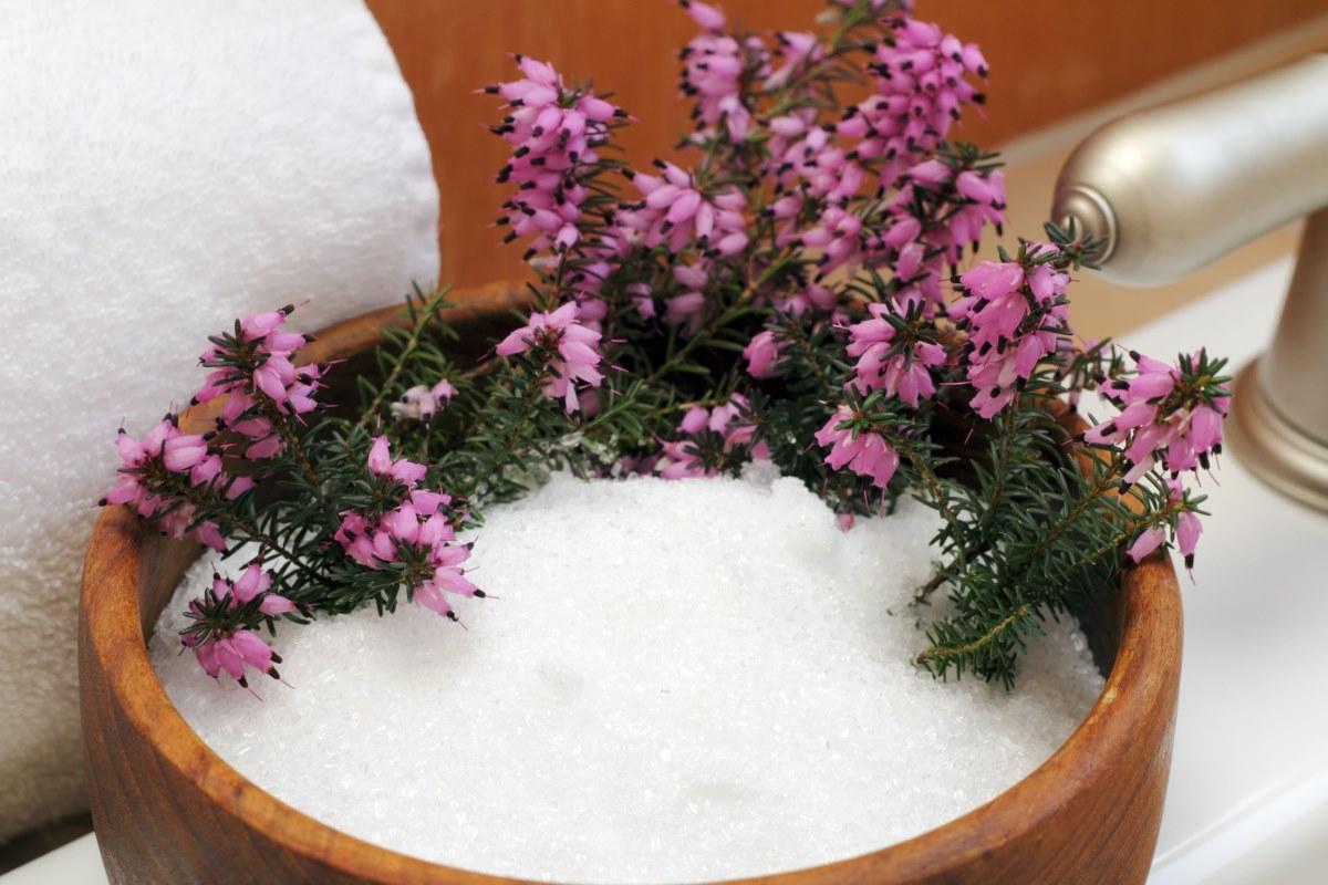 Fertilizantes naturales: que les pasa a tus plantas añadiendo un puñado de sales de Epsom al agua una vez al mes ...