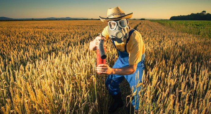 El trigo de Chernóbil todavía está contaminado, incluso lo que crece fuera de la zona de exclusión...