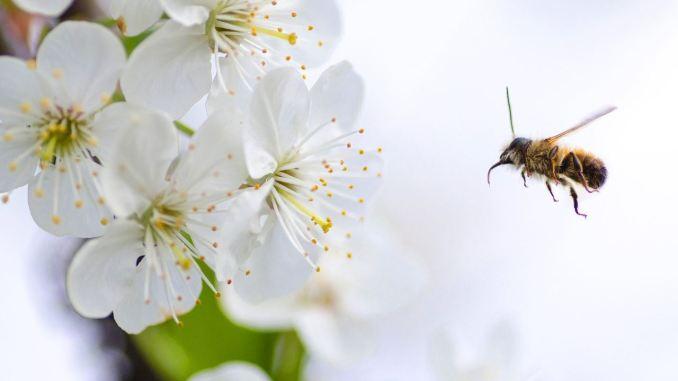 """Increíble """"sexto sentido eléctrico"""" descubierto en abejas y abejorros ..."""