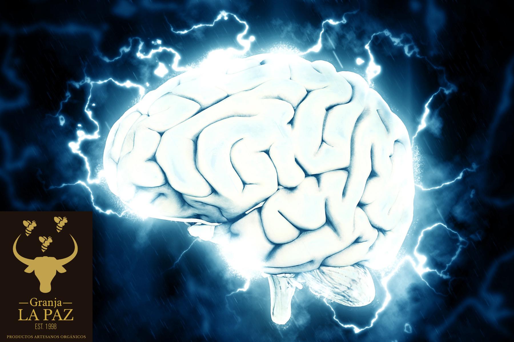 ¿Qué es la Sincronización neuronal?