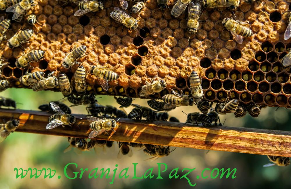 Propiedades curativas de la miel ecológica
