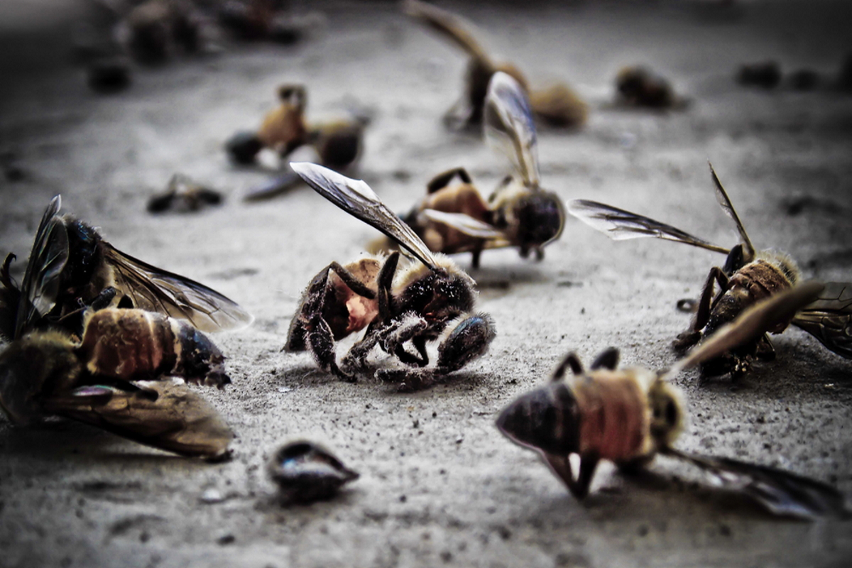 Apocalipsis de insectos: están muriendo a un ritmo sin precedentes, las consecuencias serán nefastas ...