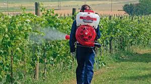 """Plaguicidas killers de abejas: 11 países los vuelven a autorizar """"por emergencia"""" (y el Reino Unido ya lo ha hecho) ..."""