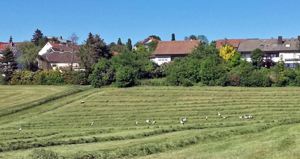 Foto: privat, Störche im Fellenweg in Künzell
