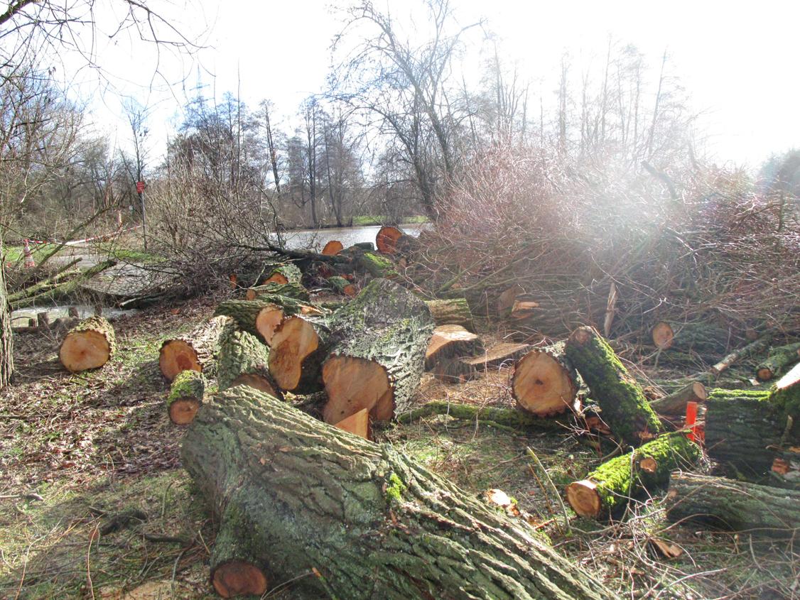 A. Erb:  Baumfällungen am zukünftigen Wassergarten