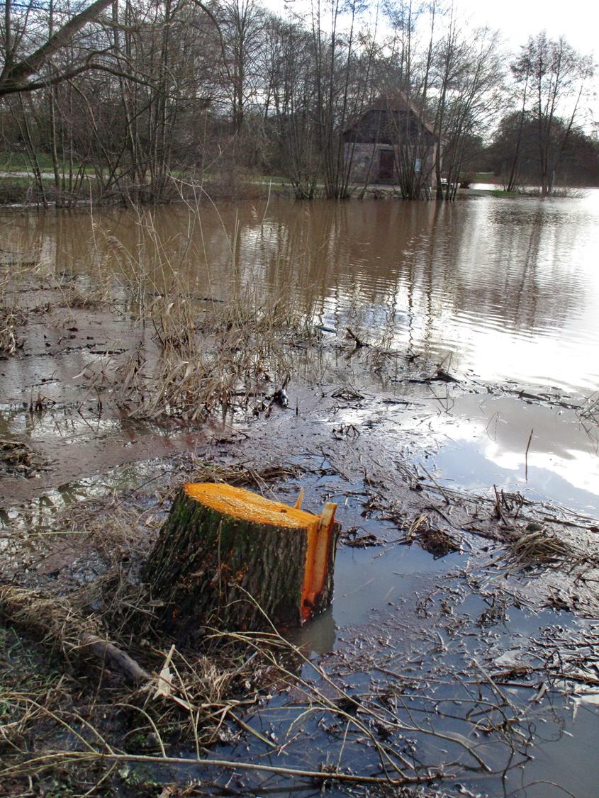 A. Erb: Diese schöne Erle wurde wegen dem Dammdurchbruch gefällt.