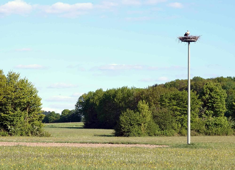 Foto: Robert Schubert, Das weithin sichtbare Storchennest im Kohlgrund bei Dirlos.