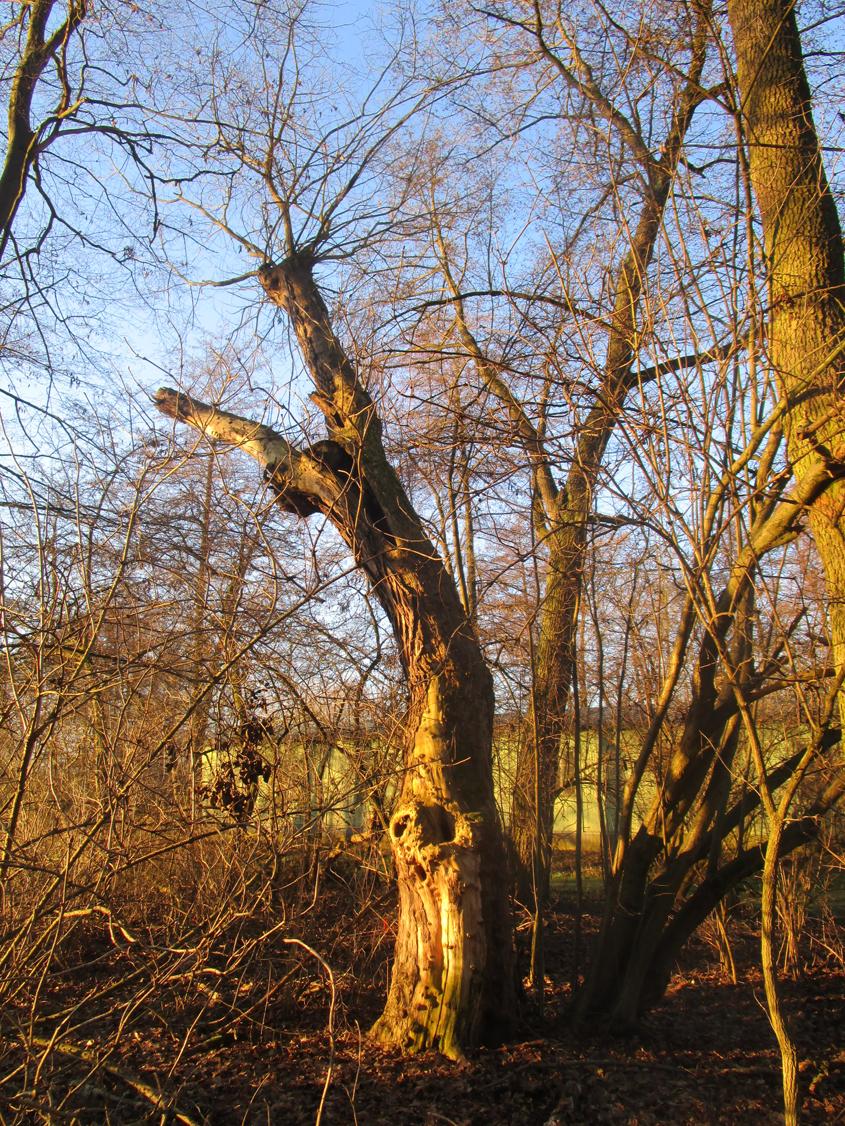A. Erb:  Der Baum sieht aus, als würde er um Hilfe schreien!