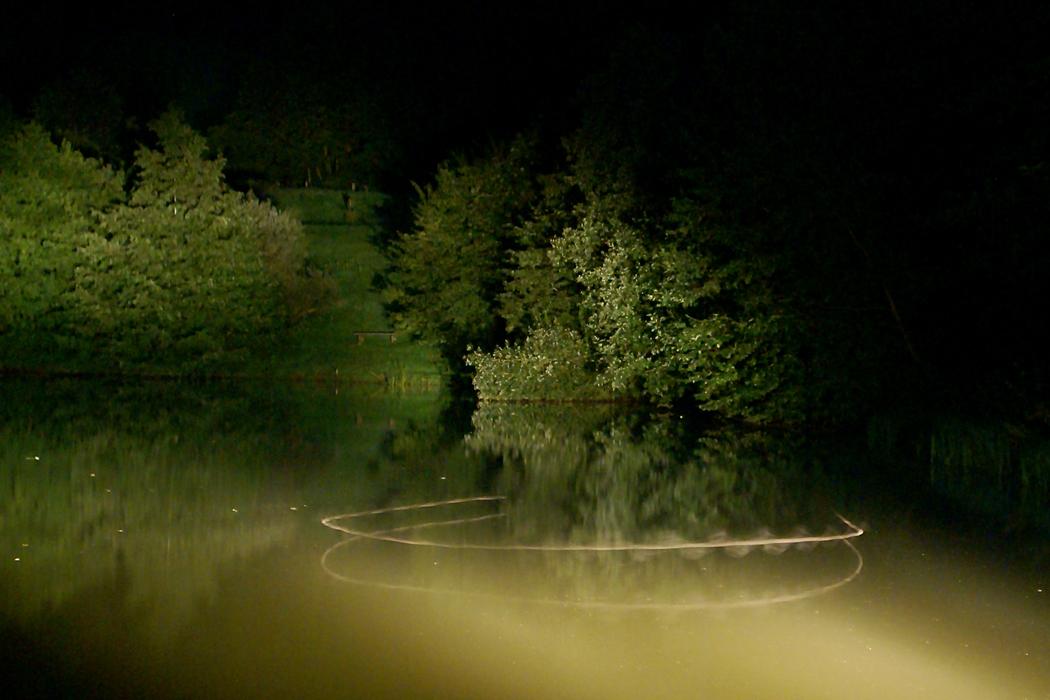 Foto: Annelie Röhm, Flugbild einer Wasserfledermaus (Myotis daubentonii)