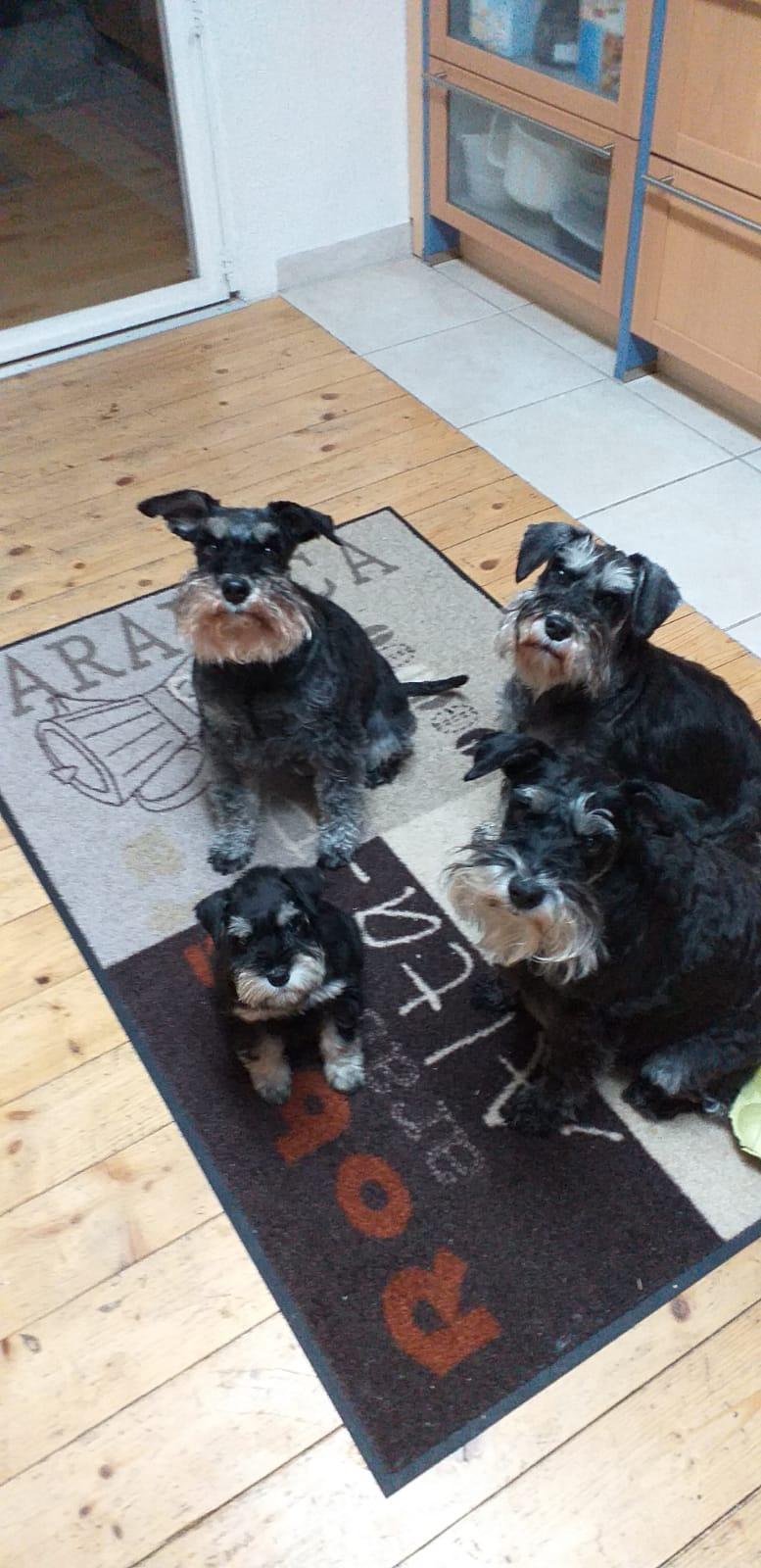 """Freia hat gleich drei neue große """"Schwestern""""!"""
