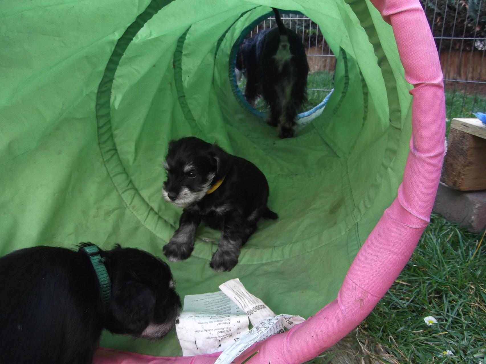 Tunnel erkunden (Attila (grün), Arabella (gelb)) und Pia