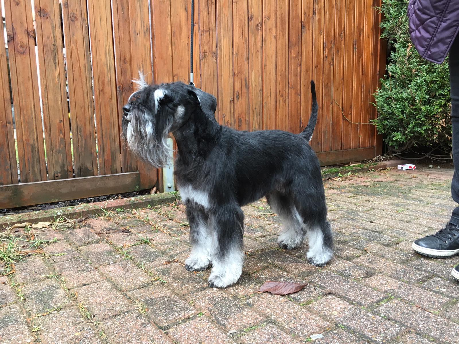 Belmonte mit drei Jahren