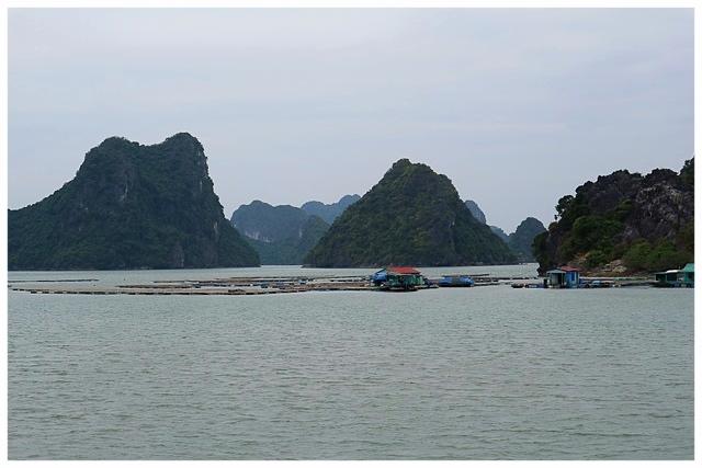 Halong Bay  halongbucht vietnam sehenswürdigkeiten bootstour