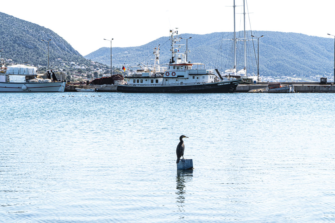 Salamina, Greece ©martin_schitto @fotomartsch