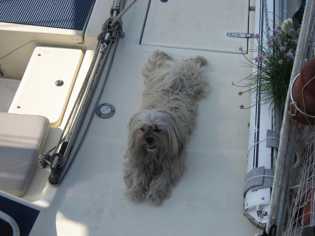 Binky, der wachhabende Offizier an Bord der CO II