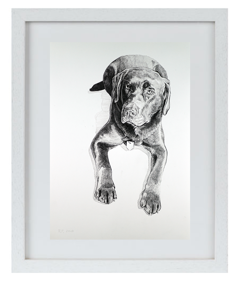"""Prima DIVA Zeichnung von """"Woody"""" dem Labrador"""