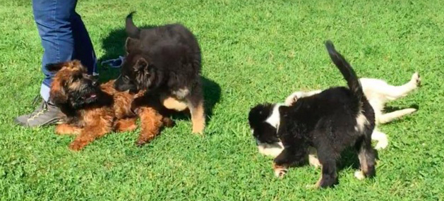 online Hundetraining, toll, Videos, gute Bindung, einfach, Hundeerziehung, optimaler Begleiter, Hundeschule, Welpenschule