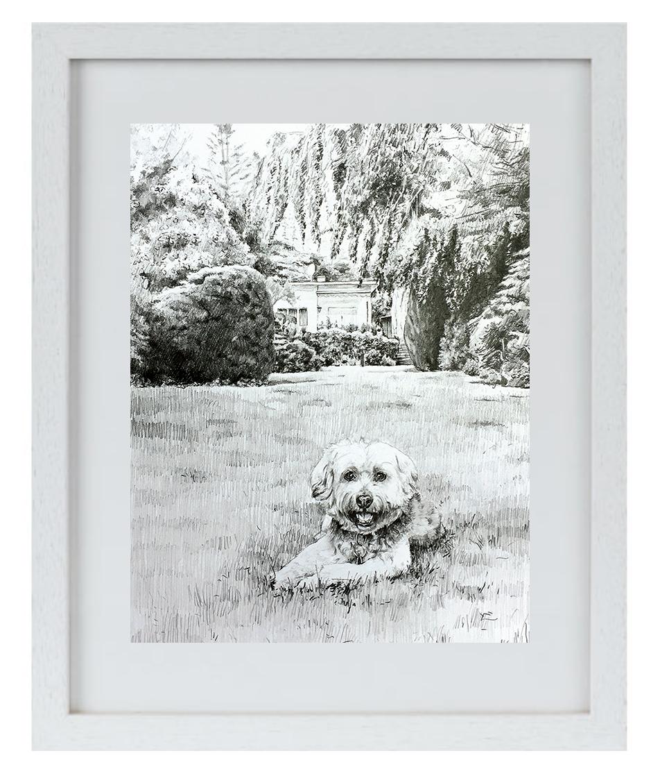 """Gold DIVA Zeichnung von """"Toni"""" dem Tibet-Terrier"""