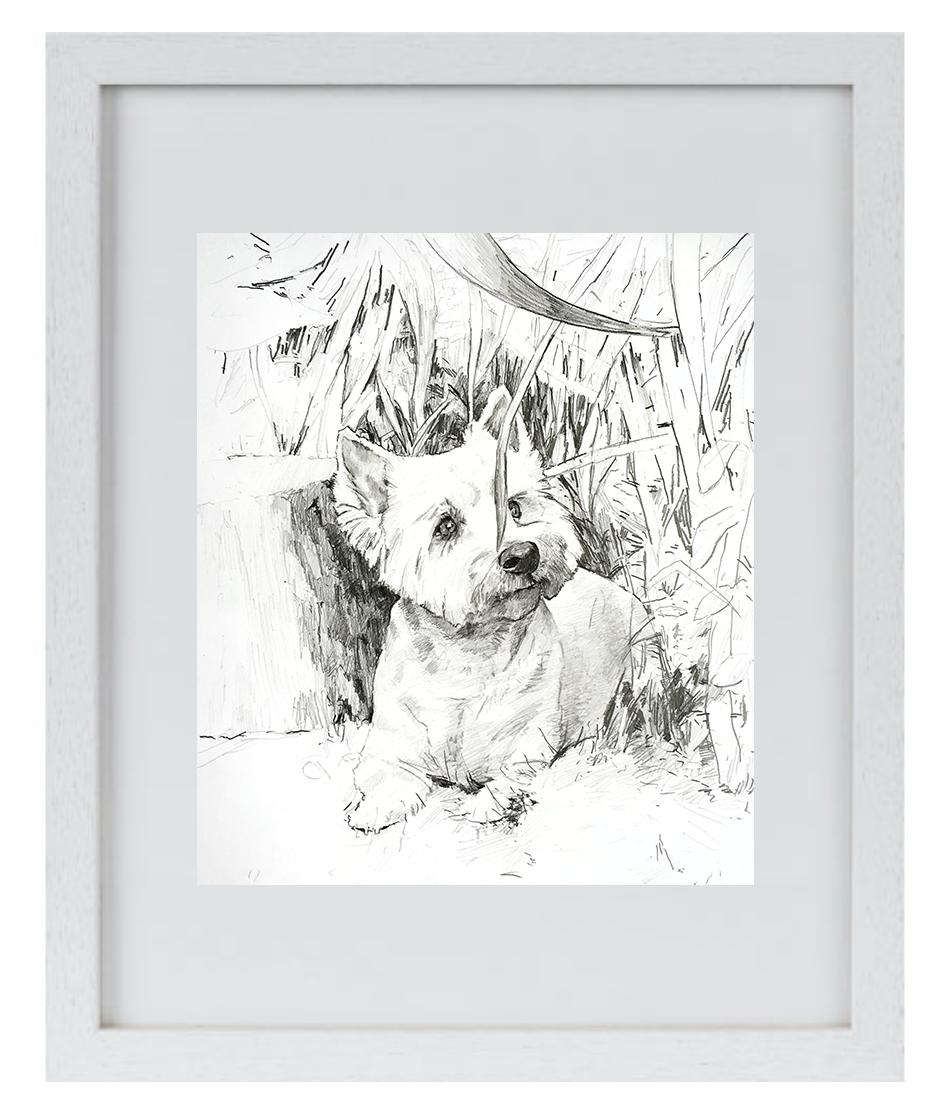"""Prima DIVA Zeichnung von """"Whisky"""" dem West Highland Terrier"""