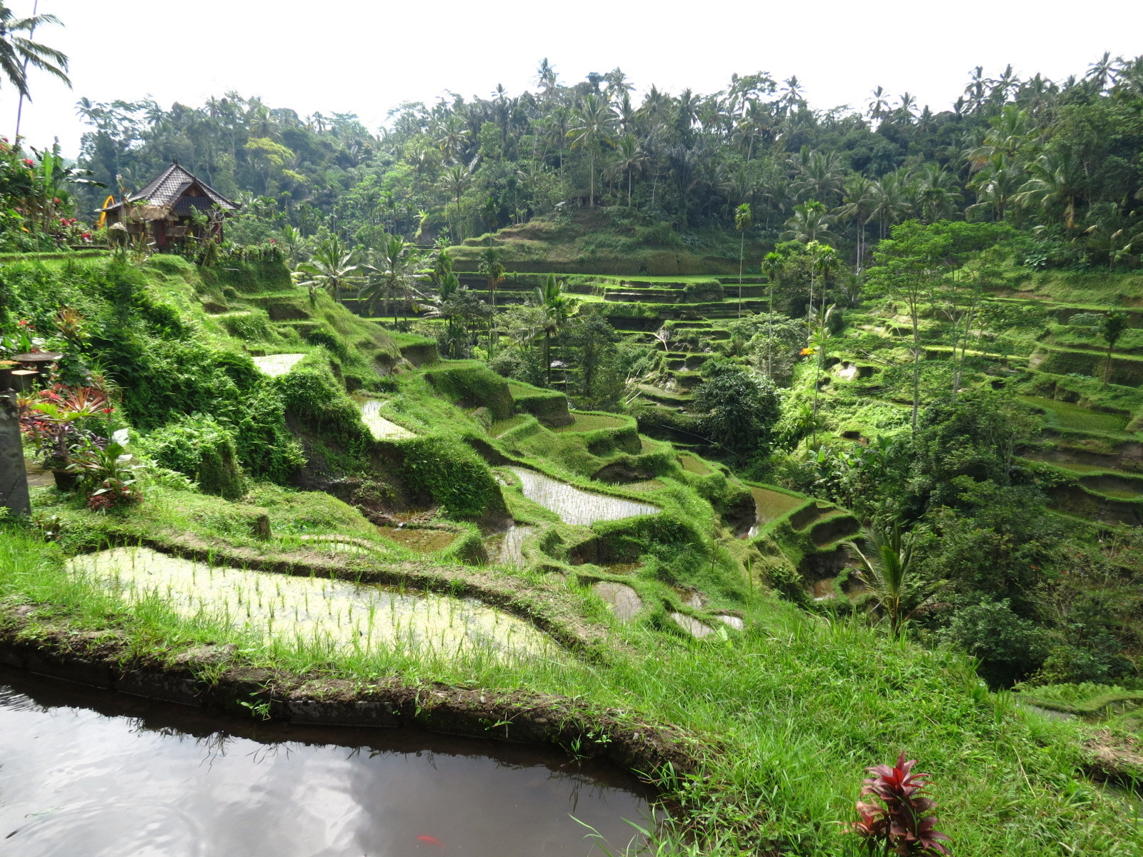 Sawah Tour : Ride in scooter through the ricefields ? It's possible with Sawah Tour !