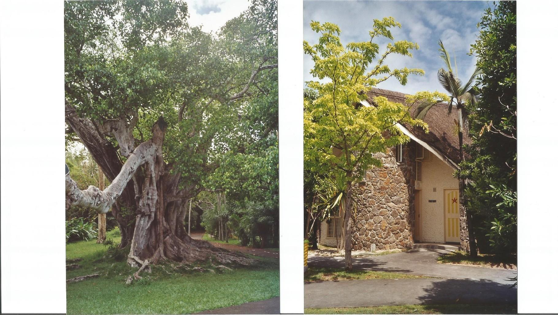 arbre  _   bungalow de l'hotel
