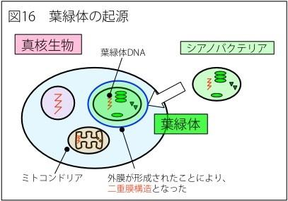 細胞 内 共生 説