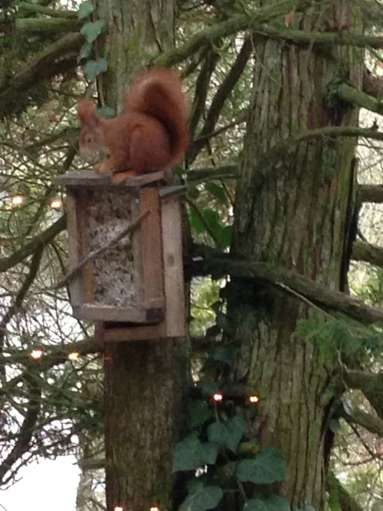 Eichhörnchen (Foto: B. Jäger)