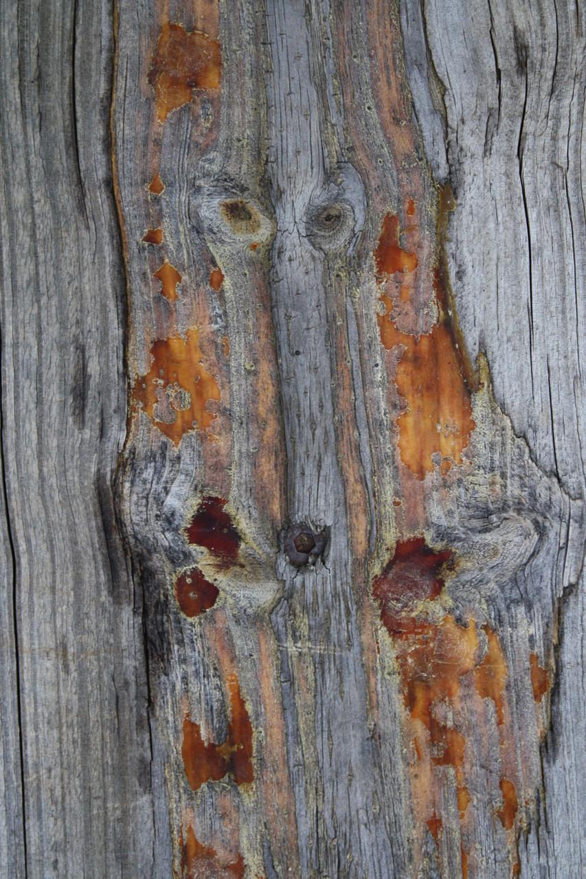 Wolf tree spirit