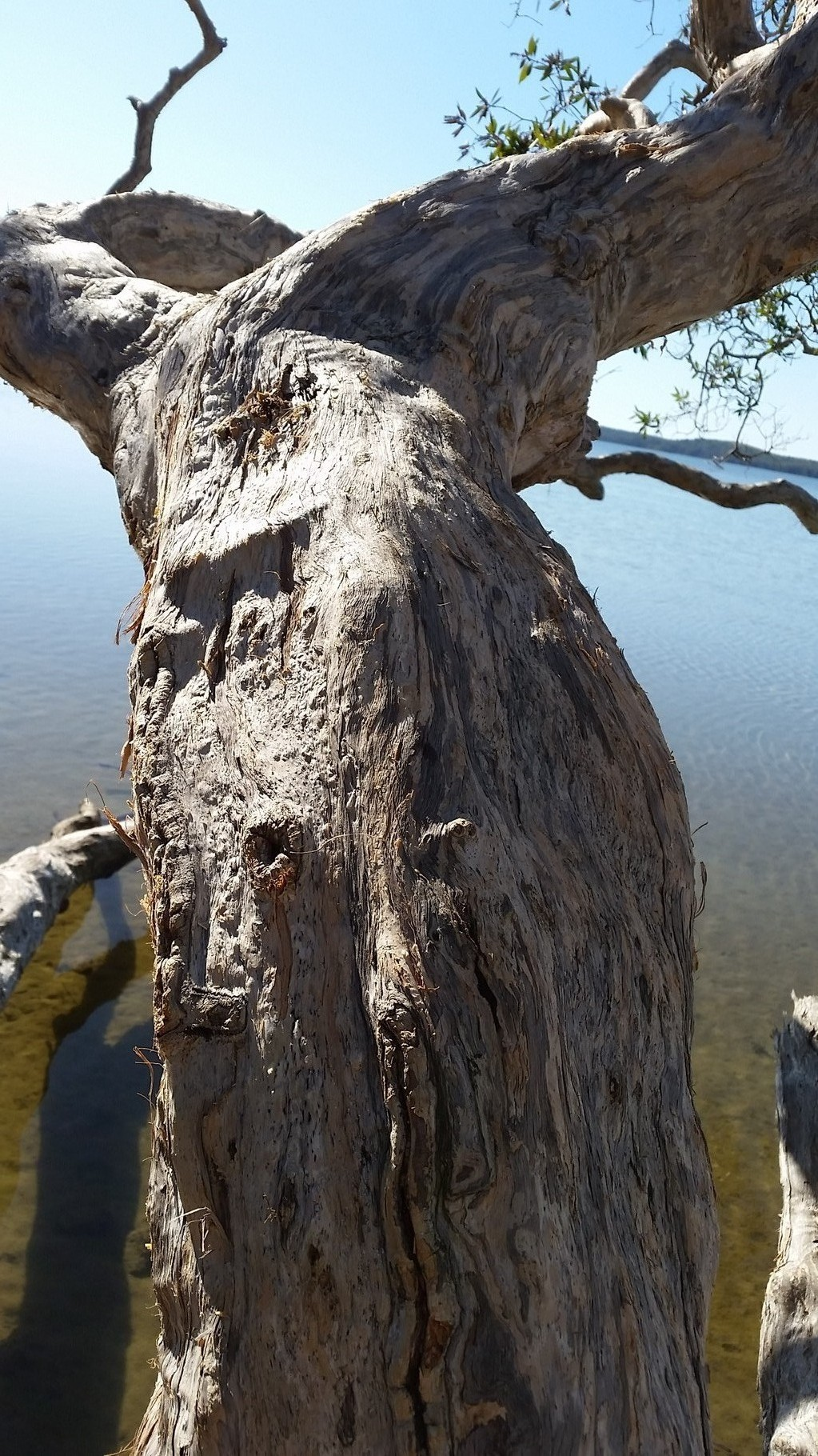Tree Spirit Lake Weyba