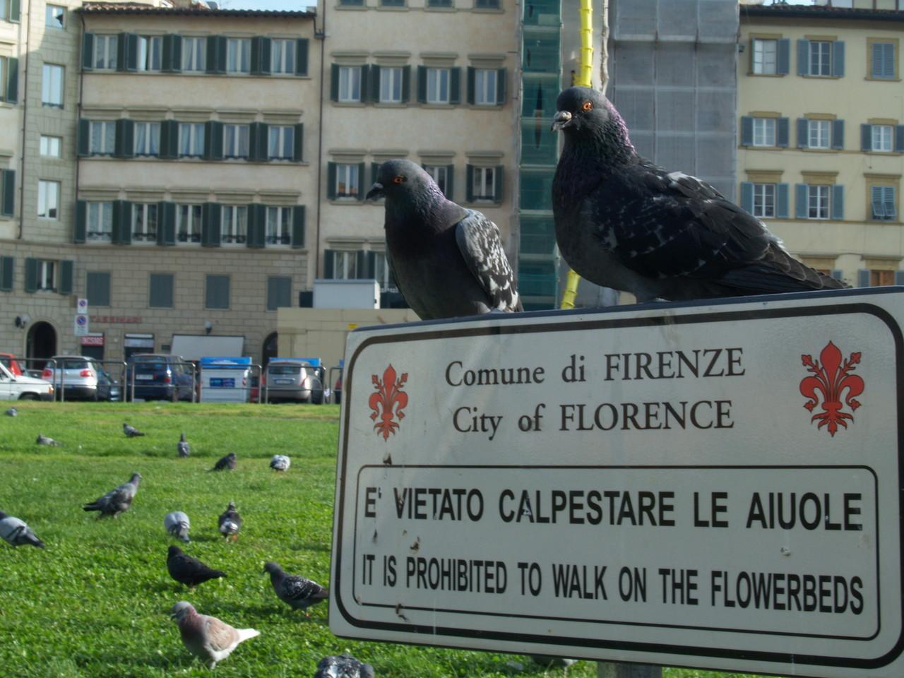Tauben können nicht lesen!!!