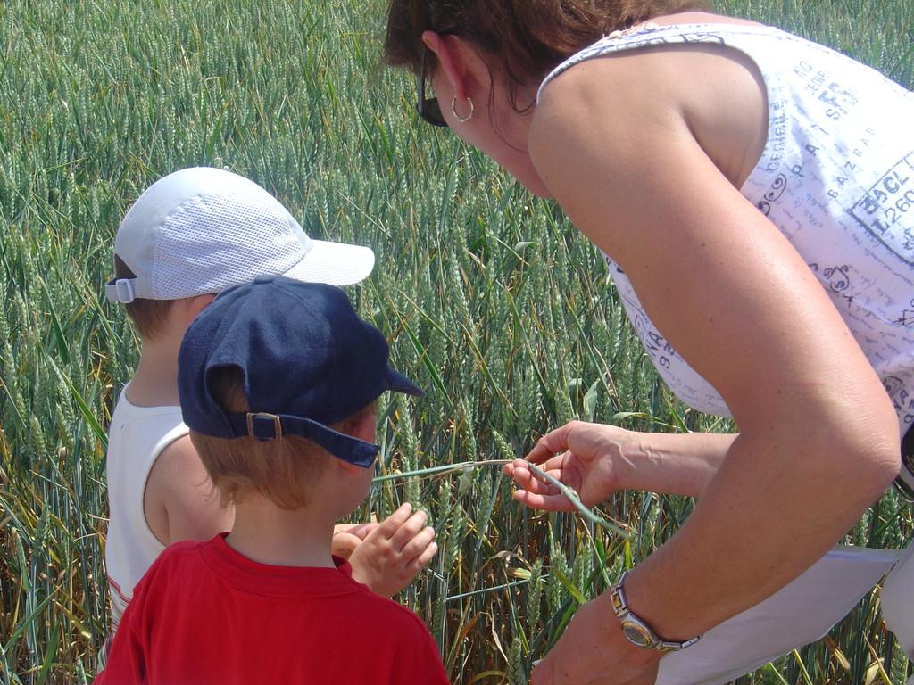Petites énigmes dans le champs de céréales