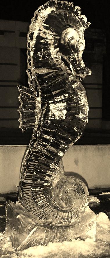 Hippocampe - Sculpture sur glace - Manon Cherpe