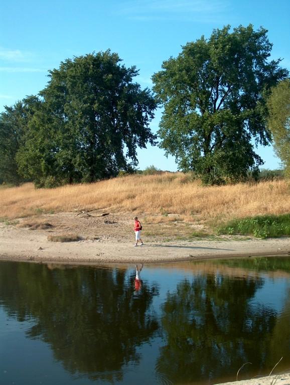 Elbufer im Sommer
