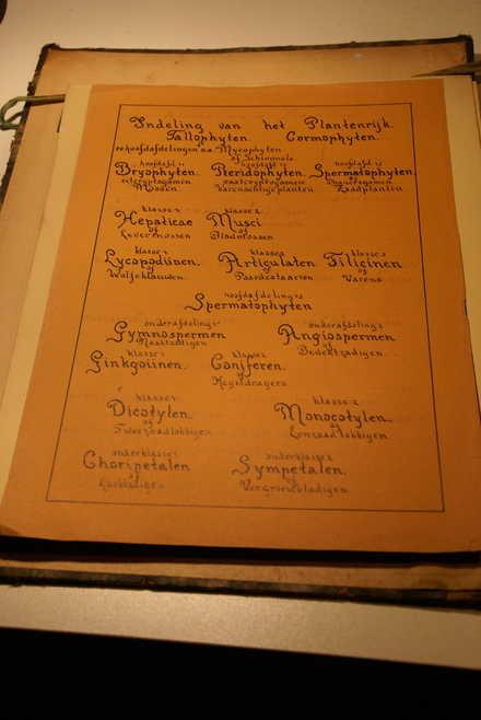 """Onderdeel joods herbarium """"Indeling van het Plantenrijk"""""""