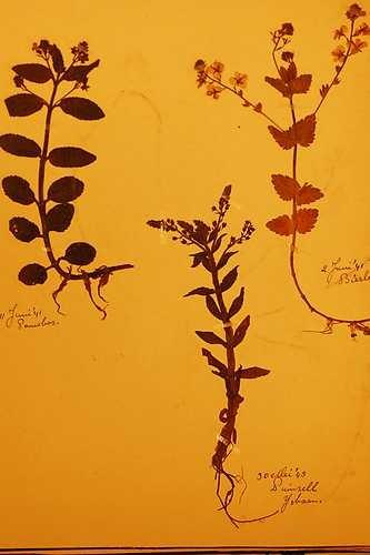 Deel van het joods herbarium