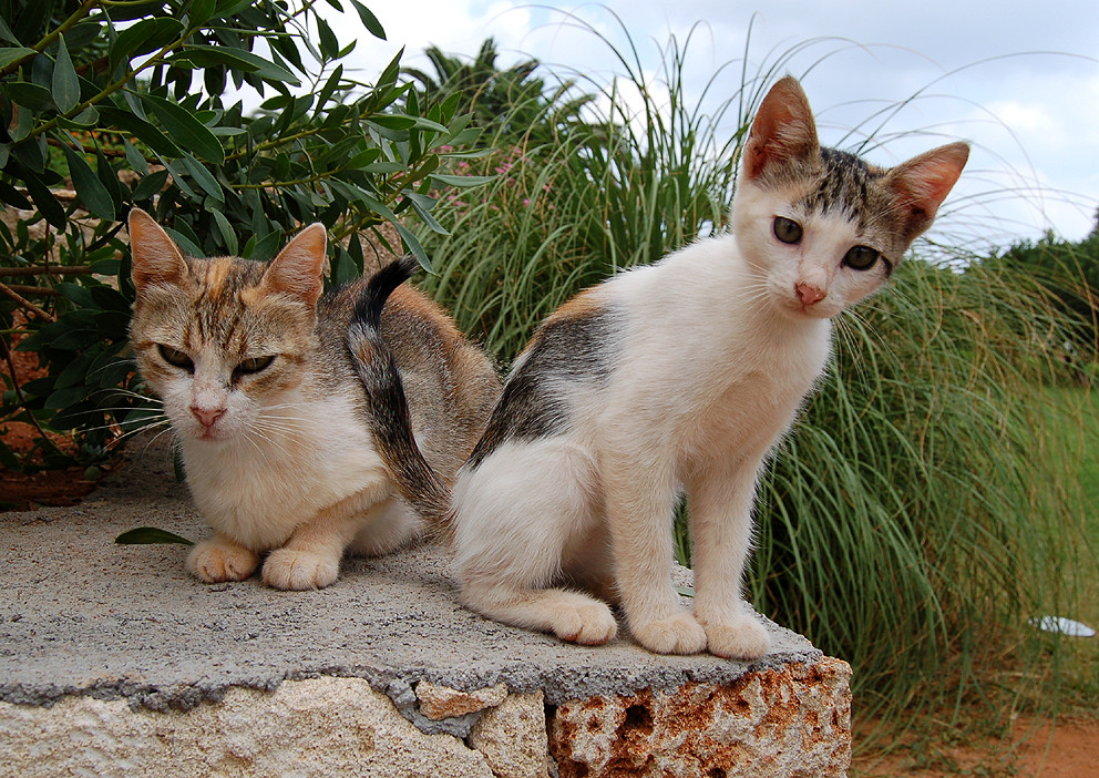 Inselbewohner, Griechenland, Kreta 2006