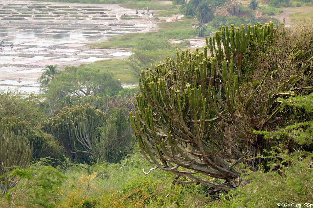 Salzsee Bunyampaka (Lake Bunyampaka)